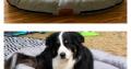 Hundebett – Holiday Travel Serie – ab Februar 2020